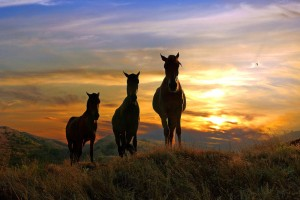 Three horses at sunset in foothills